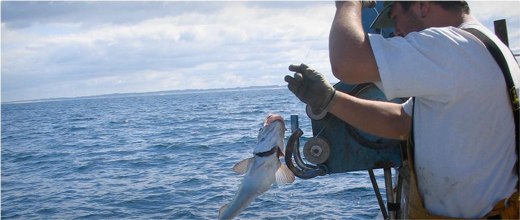 Un pécheur sort un merlu de l'eau